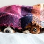 Is Reverse Cycle Air Conditioning Fit For Winter? Not just for us but for our pets too!