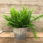 The Best Plants for Re-Humidifying Your Dry Indoor Air 4