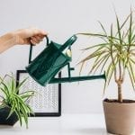 The Best Plants for Re-Humidifying Your Dry Indoor Air