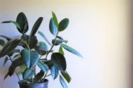 The Best Plants for Re-Humidifying Your Dry Indoor Air 6