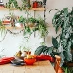 indoor plants to fight of dry air and re-humidify home